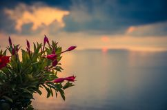 Pink red beautiful bush of flowers in foreground of amazing sea stock photos