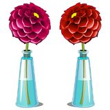 Pink and red blooming dahlia in glass vase Stock Photos