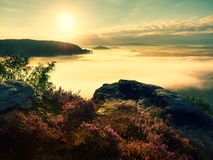 Pink red blooming heather bush on cliff in summer morning. Dreamy hilly land Stock Images