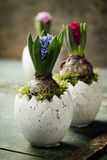 Pink, red and blue hyacinth flowers Stock Image