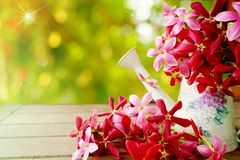 Pink and red flower on wooden table with empty space for text in soft pastel tone Royalty Free Stock Images