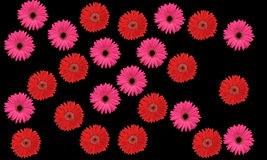Pink and Red Flowers Royalty Free Stock Photo