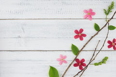 Pink and red flowers with branch and green leaves Stock Image