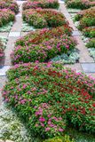 Pink and Red Phlox in Garden. Pink and Red Phlox in a Formal Garden royalty free stock photos