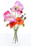 Pink and red poppies Stock Photography