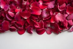 Pink, red and purple flower petals on white background royalty free stock photos