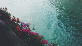 Pink Red and Purple Flowers Near Body of Water Royalty Free Stock Photography