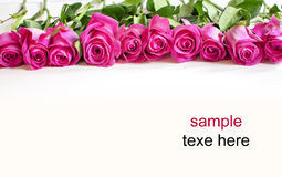 Pink red rose background Stock Photos