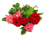 Pink and red roses bouquet on a white background Royalty Free Stock Images
