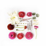 Pink and red roses or ranunculus, white tulip and green leaves on white background Royalty Free Stock Photos