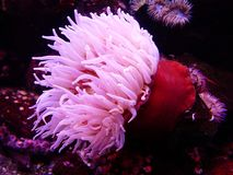 Pink and Red Seaweeds Royalty Free Stock Images
