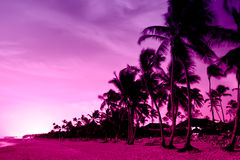 Pink and red sunset over sea beach with palms Stock Photography