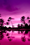 Pink and red sunset over sea beach with palms Royalty Free Stock Images