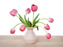 Pink red  tulips Royalty Free Stock Image