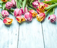 Pink and red tulips on a wooden background. Royalty Free Stock Image