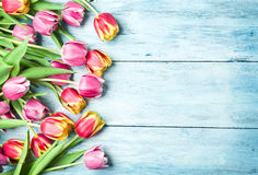Pink and red tulips on a wooden background. Stock Photography