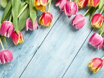 Pink and red tulips on a wooden background. Royalty Free Stock Photos