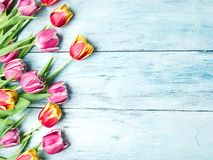 Pink and red tulips on a wooden background. Stock Photos