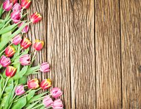 Pink and red tulips on a wooden background. Stock Image