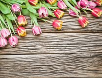 Pink and red tulips on a wooden background. Stock Images