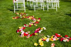 Colorful roses petals on the grass. Pink, red, yellow rose petals dows as wedding decoration at matrimony outdoors Royalty Free Stock Photo