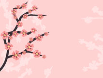 Pink retro background with sakura branch Royalty Free Stock Images