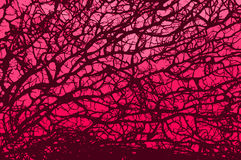 Pink retro branch Royalty Free Stock Photography