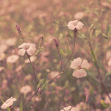 Pink retro flowers background Stock Photos