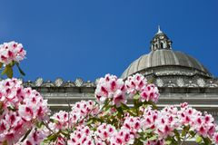 Pink rhododendron flowers frame the dome of the capitol building with a bright blue sky royalty free stock photos