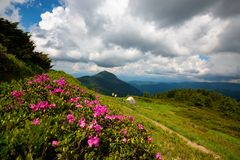 Pink rhododendrons are blooming next to adventure camp. In the mountains, under low floating clouds. Wide angle royalty free stock photo