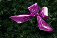 Pink ribbon in fir branches with small fairy lights for christmas Royalty Free Stock Photography