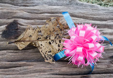 Pink ribbons on dry wood Royalty Free Stock Photography