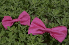 Pink Ribbons on leaves Royalty Free Stock Photo