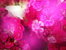 Pink romance Royalty Free Stock Image