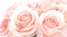 Pink Romance. Close up of beautiful Pink roses royalty free stock photos