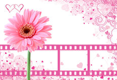 Pink romantic background Stock Photos