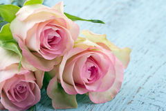 Pink roses on light blue wooden background Royalty Free Stock Images