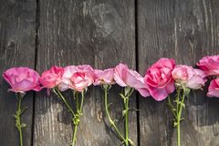 Pink romantic roses on rustic wooden background stock photography