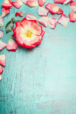 Pink rosa flower with petals on blue turquoise shabby chic background, top view, place for text, vertical Royalty Free Stock Image