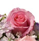 Pink rose. Close up of pink rose royalty free stock image