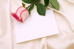 Pink rose. And blank letter Royalty Free Stock Photography
