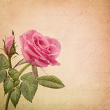 Pink rose. And old letter Stock Photo