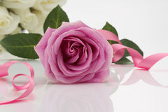Pink Rose. On white reflective background Stock Photos