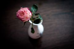 Pink Rose. Lovely mood and a pink rose Royalty Free Stock Photo