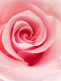 Pink rose. Close up of a pink rose Royalty Free Stock Photos
