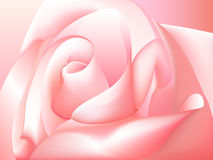 Pink rose. Pink beautiful rose for design Vector Illustration