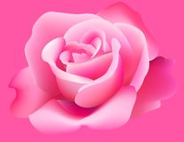 Pink rose. Pink beautiful rose for design Royalty Free Illustration