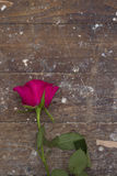 Pink rose abandoned on wooden floor Stock Images