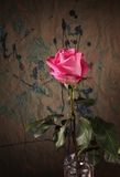 Pink rose against grunge background Stock Photos