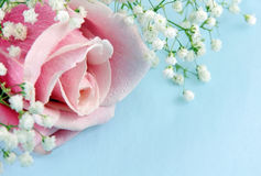Pink Rose and Baby's Breath Stock Photo